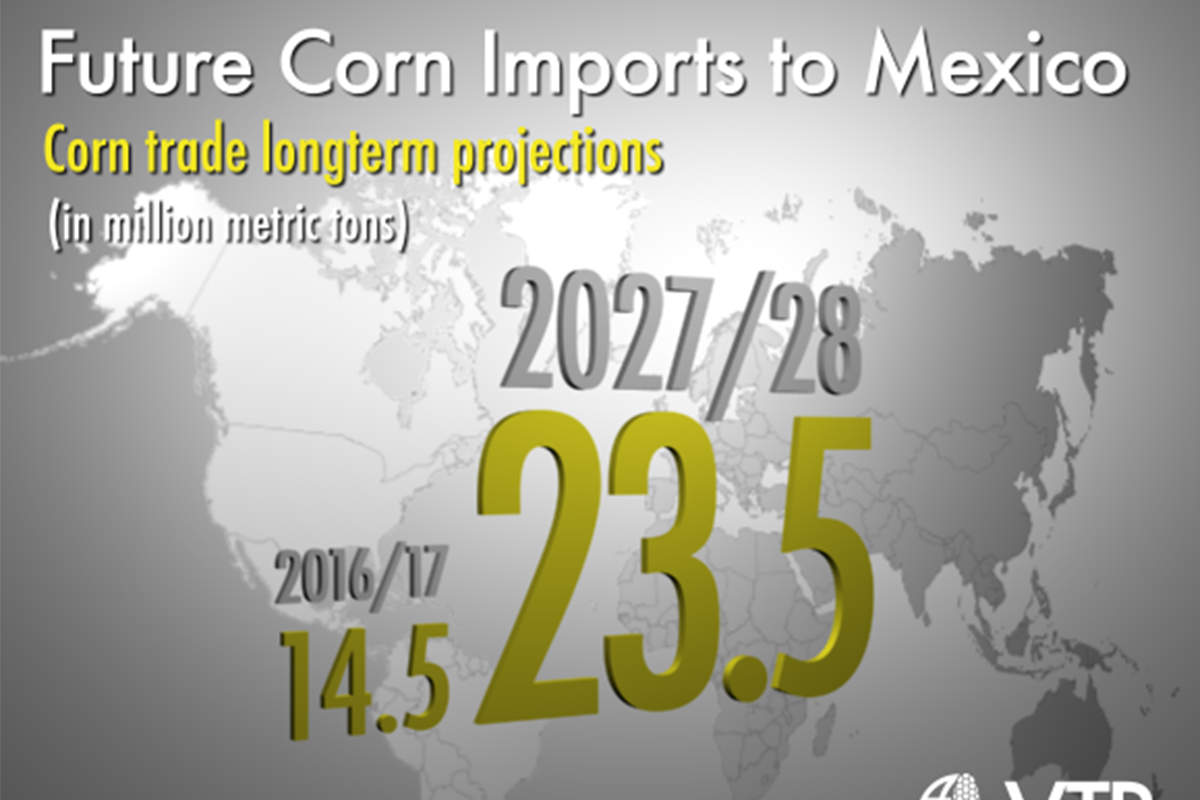 Future Corn Exports to Mexico